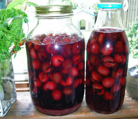 Have a sip of homemade cherry cordial to ring in 2009.