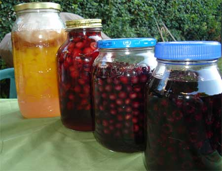 Last year's collection of cordials in the works: peach, strawberry, blueberry and raspberry. Sadly, they are all gone.