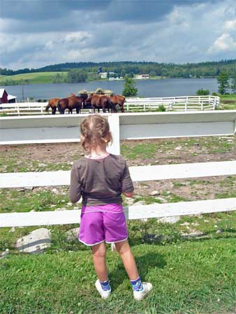 My Girl in Braids watching the horses at Duck Harbor Pond.