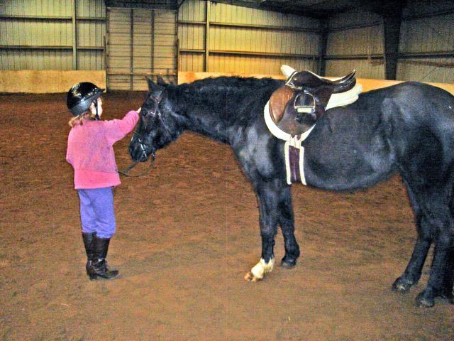 stargirl-horse.jpg-1